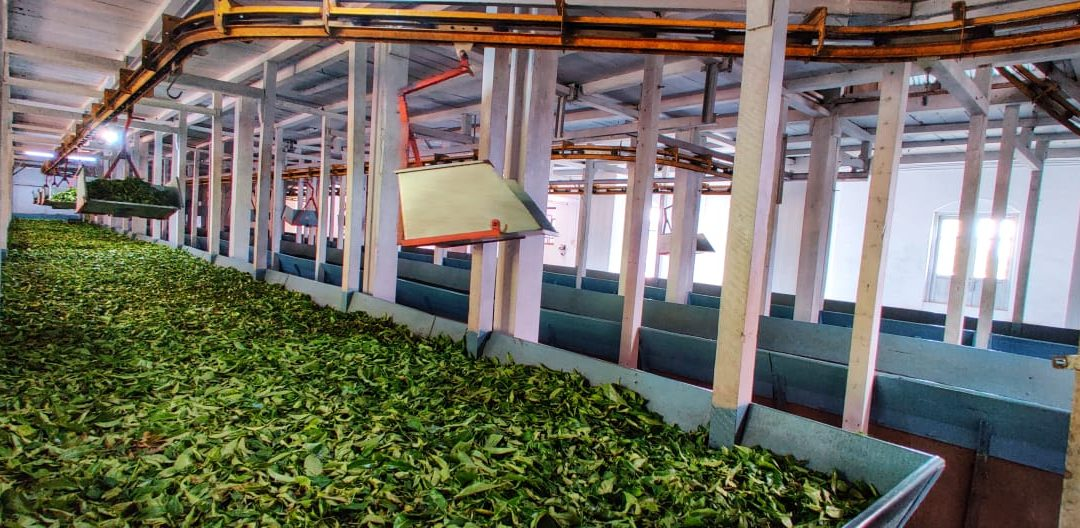 Homedale tea's new price record